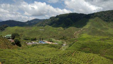 IMAG2080 390x220 - مرتفعات الكاميرون جنة خضراء
