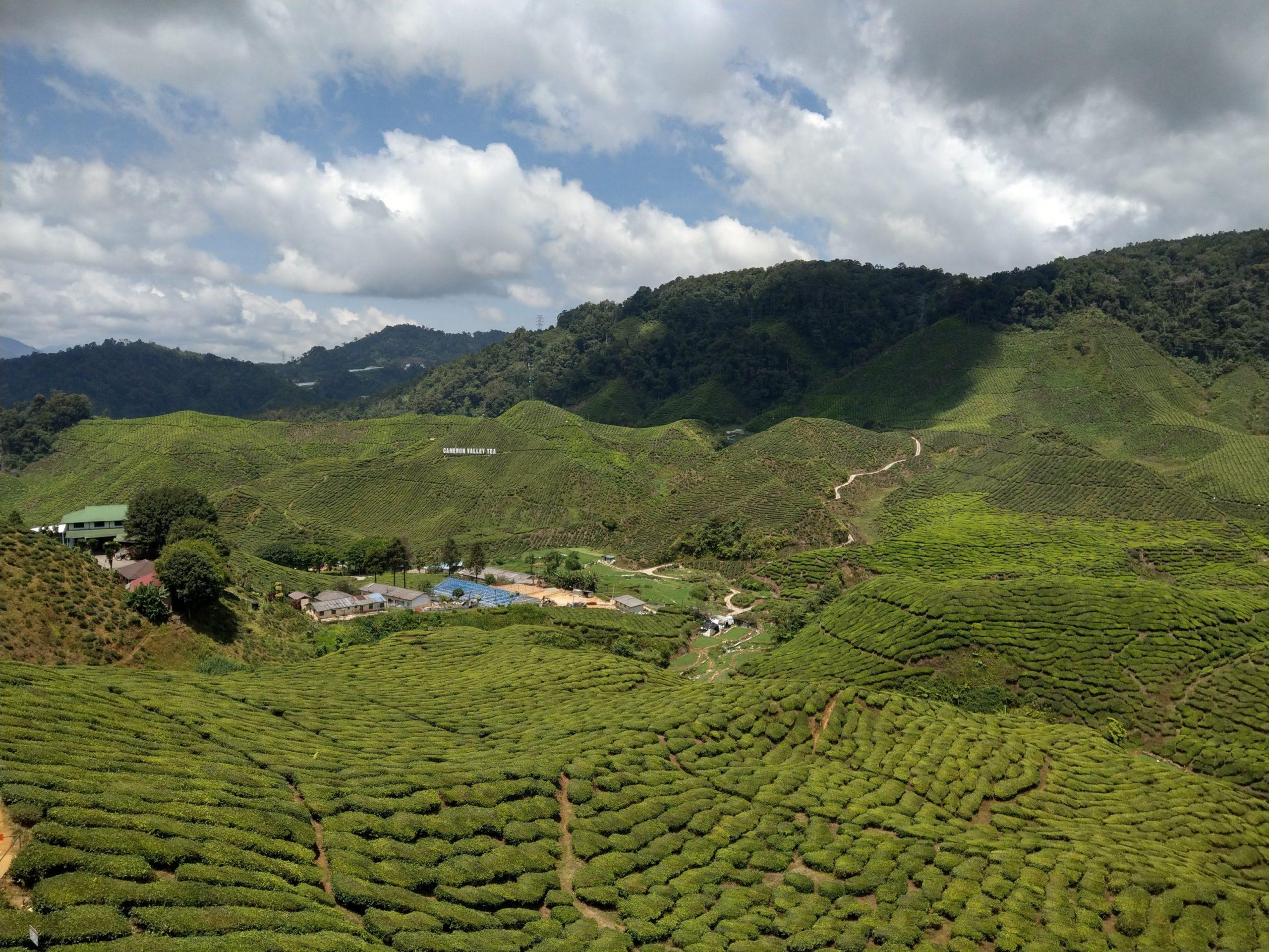 IMAG2080 scaled - مرتفعات الكاميرون جنة خضراء