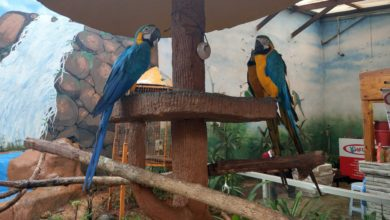 Langkawi Wildlife Park 390x220 - حديقة الطيور في لنكاوي